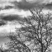 Tree against cloudy sky Stock Photos