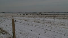 Snow covered river foreland konik horses in distance  + pan Stock Footage