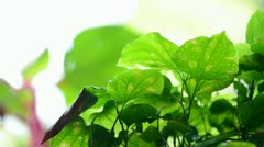 Background of wild flora leaves Stock Footage