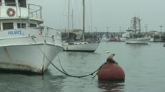 P02554 California Sea Lion on Buoy in Harbor Stock Footage