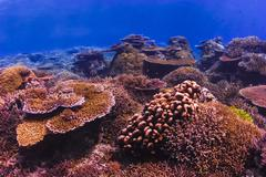 Colorful and healthy coral reef Stock Photos