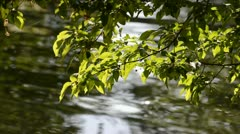 Tree Branches with River Reflection - stock footage