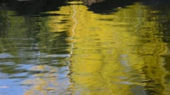 Duck Swimming in a Fall Afternoon - stock footage