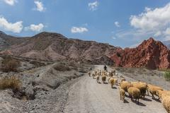 Sheep at hills of seven colours Stock Photos