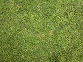 ZB Pureview - Golf Grass Texture 1 Stock Photos