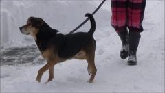Koira lumessa Arkistovideo