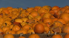 Pumpkin decoration Stock Footage