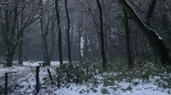 Snow falling in forest with greenary Stock Footage