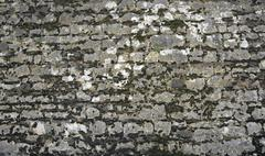 old overgrown stone wall - stock photo