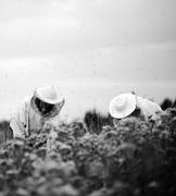 beekeepers working on the field - stock photo