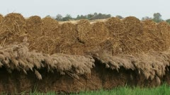Reed stack, reed harvest Stock Footage
