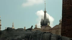Pigeon and Mariacki Church in Cracow, Poland Stock Footage