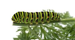 Caterpillar. Stock Photos