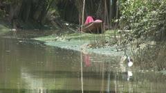 Wading Bird and a Boat at Amphawa p2 Stock Footage