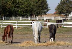 Horses and foals in corral farm scene Stock Photos