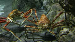 Two large crab underwater Stock Footage