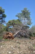 fallen trees - stock photo
