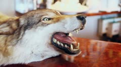 Muzzle with jaws of wolf near bar with coffee beans in glass Stock Footage