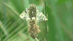 Bee flower Stock Footage