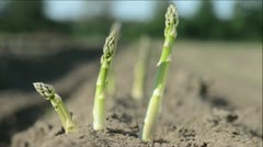 Stock Video Footage of asparagus