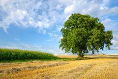 Colorful rural landscape Stock Photos