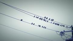 Birds wire 2 Stock Footage