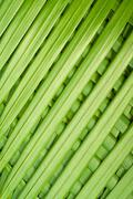Reed palm leaves Stock Photos