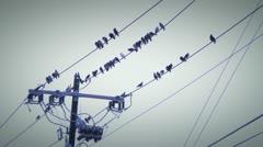Birds wire 3 Stock Footage