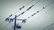 Birds wire 3 Stock Footage