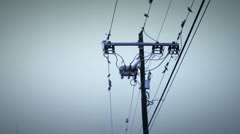 Birds wire 5 Stock Footage