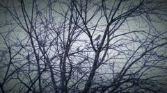 Birds 1 Stock Footage