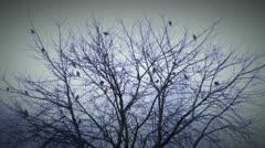 Birds 3 Stock Footage
