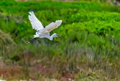 Stock Photo of egret and vegetation