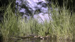 Chiffchaff flying_01 Stock Footage