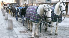 On street there is row of carriages with horses at day. - stock footage