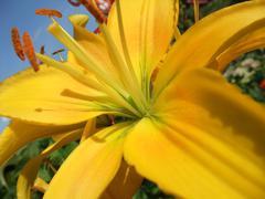 Stock Photo of yellow flower closeup