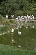 Waterside scenery and flamingoes Stock Photos
