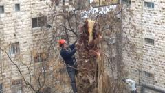 Cutting palm tree Stock Footage