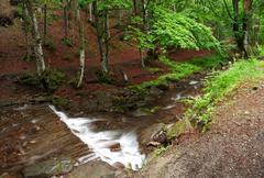 Woodland stream. xxl size. Stock Photos