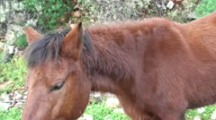 Beautiful horse close up Stock Footage