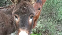 Caring horse and melancholic donkey Stock Footage