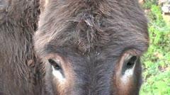 Donkey eyes Stock Footage