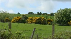 Rural Irish landscape + Common gorse in bloom - stock footage