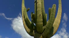 Clouds Boil Over Arizona Saguaro Cactus Time Lapse Stock Footage