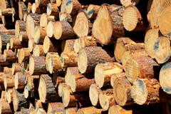 Background of Cut Pine Logs Stock Photos