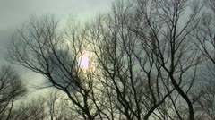 Eerie Tree Scenic - stock footage