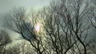 Stock Video Footage of Eerie Tree Scenic