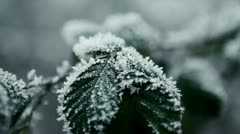 Close-up of leaves with hoar frost, Pacific Northwest Stock Footage