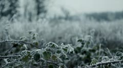 Blackberry vines in wintery countryside with hoar frost, Pacific Northwest Stock Footage