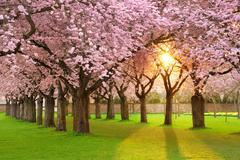 Fascinating springtime scenery Stock Photos